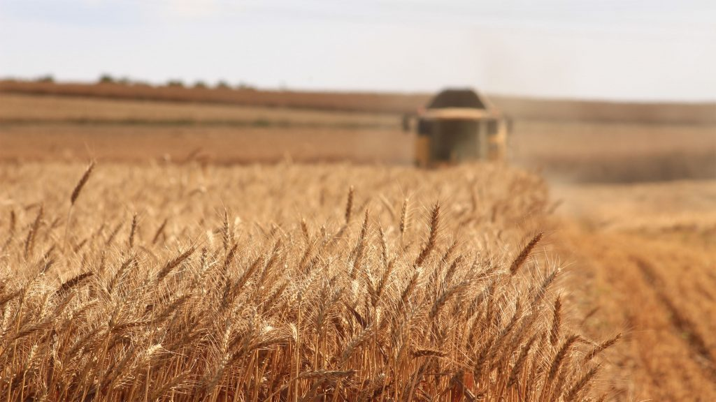 harvesting crops sprayed with pesticides